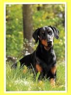 Hund ☼ Dog ☼ Dobermann - - Chiens
