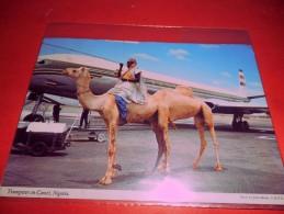 B655 Nigeria Trumpeter On Camel Viaggiata Pieghina Angolo - Nigeria