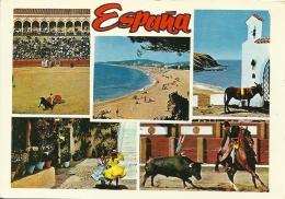 Espana / Ane Ezel Donkey Cheval Paard Horse - Corrida