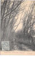 AUVERS SUR OISE - Un Sous-bois à Chaponval - Auvers Sur Oise