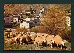 ANDORRA  -  Canillo  Used Postcard As Scans - Andorra
