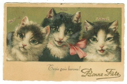 Animaux // Chats - Chats