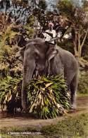 "05470 ""SRI LANKA - A WORKING ELEPHANT - CEYLON "" CART. POST. ORIG. SPEDITA - Sri Lanka (Ceylon)"