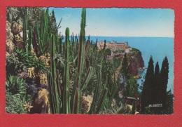 Monaco  --  Les Jardins Exotiques - Exotic Garden