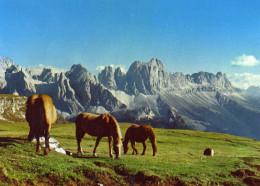 Dolomiti - Dolomiten- Dolomites-  Pascolo Sul Monte Pez - Italy