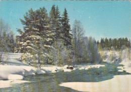 42701- FINNISH LANDSCAPE IN WINTER, RIVER - Finland