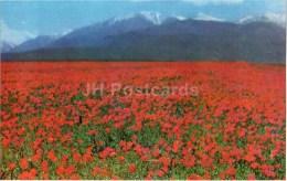 Ala-Too Range - Field Of Flowers - 1974 - Kyrgyzstan USSR - Unused - Kirghizistan