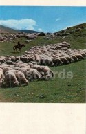 Jailoo - Sheep - Horse - Shepherd - 1974 - Kyrgyzstan USSR - Unused - Kirghizistan