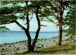 Seashore Near Tuja - Pine Trees - Vidzeme Seaside Views - Latvia USSR - Unused - Lettonie