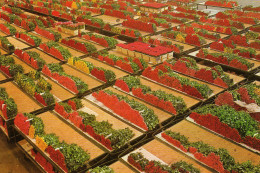 Cutflower Section United Flower Markets- Der Verenigde Bloemenveilingen - Alsmeer - Aalsmeer