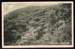 "OLD PHOTO CARD "" TREE FERNS "" Saint Kitts - Saint-Christophe-et-Niévès"