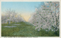 US SHENANDOAH / Apple Blossom Time In The Shenandoah Valley / CARTE COULEUR - Etats-Unis