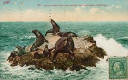 USA SAN FRANCISCO / Seal Rocks Near Cliff House / CARTE COULEUR - San Francisco
