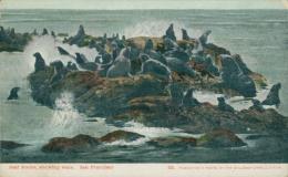 USA SAN FRANCISCO / Seal Rocks, Showing Seals / CARTE COULEUR - San Francisco