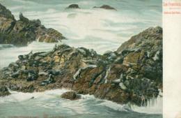 USA SAN FRANCISCO / Seals On The Rocks / CARTE COULEUR - San Francisco
