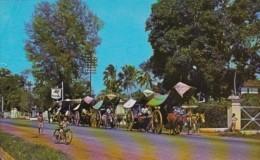 Malaysia Malacca Bullock Carts - Malaysia