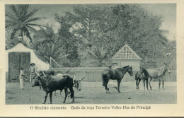 SAO TOME ET PRINCIPE - Sao Tome And Principe