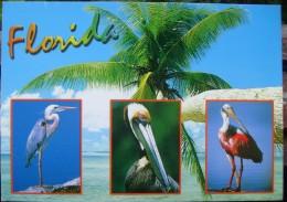 Florida - Three Birds - Verenigde Staten