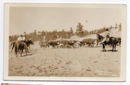 USA--Wyoming--TEPEE LODGE--Big Horn (très Animée,ranch Avec Vaches, Chevaux Et Cowboys)  14 X 9   éd  ???---Belle Carte - Etats-Unis