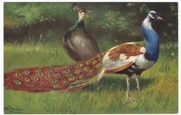 Unknown Artist Signed Image Peacock Birds, C1910s Vintage Postcard - Easter