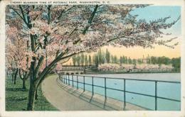 US WASHINGTON DC / Cherry Blossom Time At Potomac Park / CARTE COULEUR - Washington DC