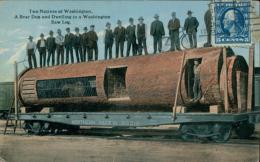 US WASHINGTON DC / Two Natives Of Washington, A Bear Den And Dwelling In A Washington Saw Log / CARTE COULEUR GLACEE - Washington DC