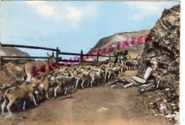 63 - PAYSAGE D' AUVERGNE - EN ROUTE POUR LES PATURAGES EN MONTAGNE - ECRITE DE BOURG LASTIC - ANE MOUTONS - France