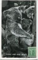 8921 AUSTRALIA, Maximum  1966 Koala - Maximum Cards