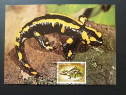 Carte Maximum Card Salamandre Salamander Obl. FDC Luxembourg 1987 - Altri