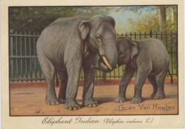 CHROMO - Chocolat VAN HOUTEN - Eléphant Indien - Van Houten