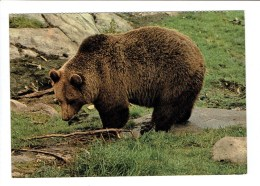 35131 ( 2 Scans ) Ours Brun - Bruine Beer - Brown Bear - Orso Bruno - Braunbar - Ours