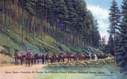 Pack Train-contains 64 Horses AndMules....carte Neuve - Coeur D'Alene