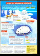 2 Scans / Animaux Du Pôle Nord Arctique Renard Polaire Ours Lemming Husky Caribou Boeuf Musqué Animal   // VP01-FICH-11 - Vieux Papiers