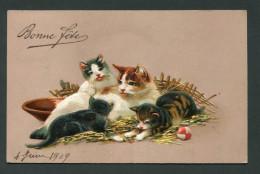 CPA GAUFREE - CHATS - Katten