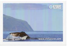 Portugal  AÇORES - AZORES - Whale Watching - Açores