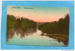 SIERRA LEONE- Mangrove Swamp -années 1910-20-édition Canning & Ashworth - Sierra Leone