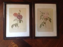 "COPPIA STAMPE PRIMI '900 - Riproduz. Da Stampe Redouté "" ROSE ""  - In Cornici D'epoca - Prints & Engravings"