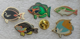 POISSONS EXOTIQUES 5 PIN'S      YYY   167 - Pins