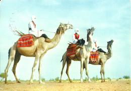 Sahara Espanol (espagnol) : Meharistas - Sahara Occidental