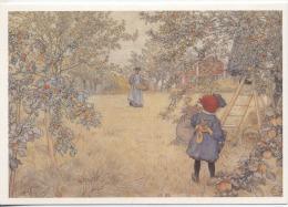 """CARTE ILLUSTRATEUR -  CARL LARSSON  -  """" Apple Harvest """"  - """" La Cueillette Des Pommes """"  - Artiste - Schilderijen"""