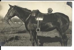 CPA , Un Cheval, Autriche K Et K Feldpostamt N° 71 , Corps Des Télégraphe N° 11 (426/27) - 1850-1918 Empire