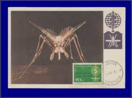 Bulgarie, Carte Maximum, Yvert 1135, Moustique - Bulgaria