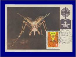 Nations Unies, Carte Maximum, Yvert 98, Moustique - Stamps