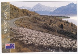Mustering Sheep By Lake Pukaki With Mount Cook  - New Zealand - Nieuw-Zeeland