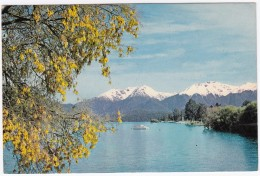 Lake Te Anau (Yellow Kowhai Flowers)  - New Zealand - Nieuw-Zeeland
