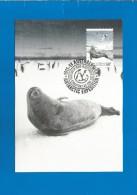 AAT 2013  Mi.Nr. 214 , Weddell Seal - Maximum Card - First Day  10 September 2013 - Maximum Cards