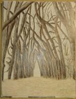 Dessin Au Crayon-Illustrateur - Sous Bois   (7) - Tekeningen