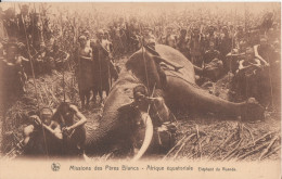 Afrique Equatoriale Missions Des Peres Blancs Elephant De Ruanda - Rwanda