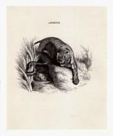 1844 - Gravure Sur Bois - Edwin Landseer - Tigre Affrontant Un Serpent - FRANCO DE PORT - Estampas & Grabados