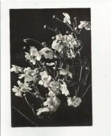 102843 Cartolina Con Fiori - Fiori